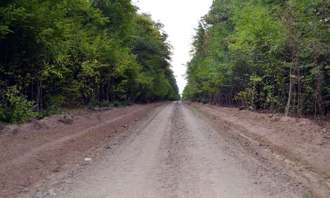 Шість кілометрів лісових доріг створять у Кам`янському держлісгоспі