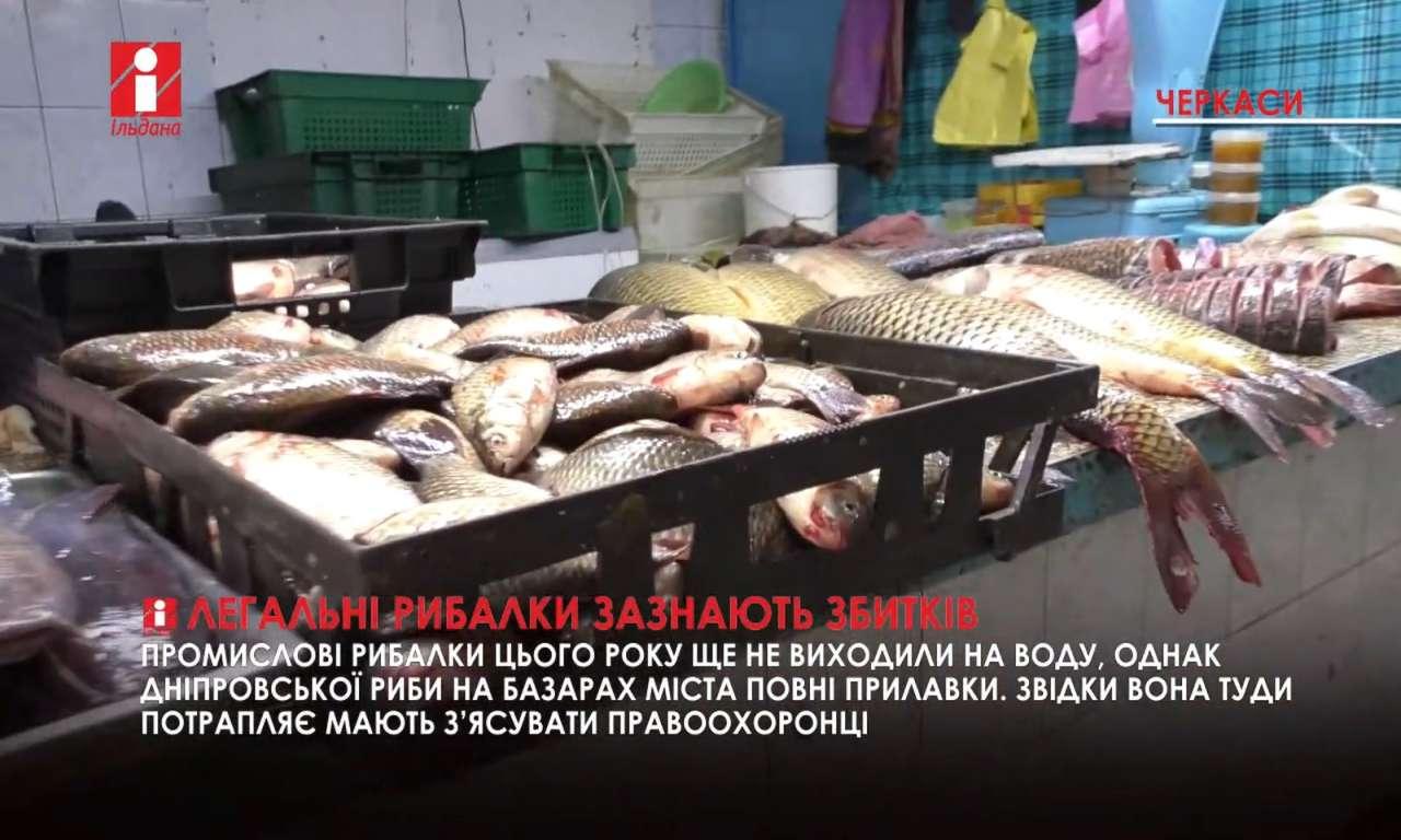 Промисловим рибалкам не дають можливості працювати