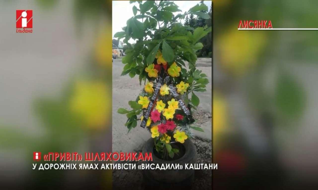 Лисянські активісти «висадили» в ямина дорозі каштани (ВІДЕО)