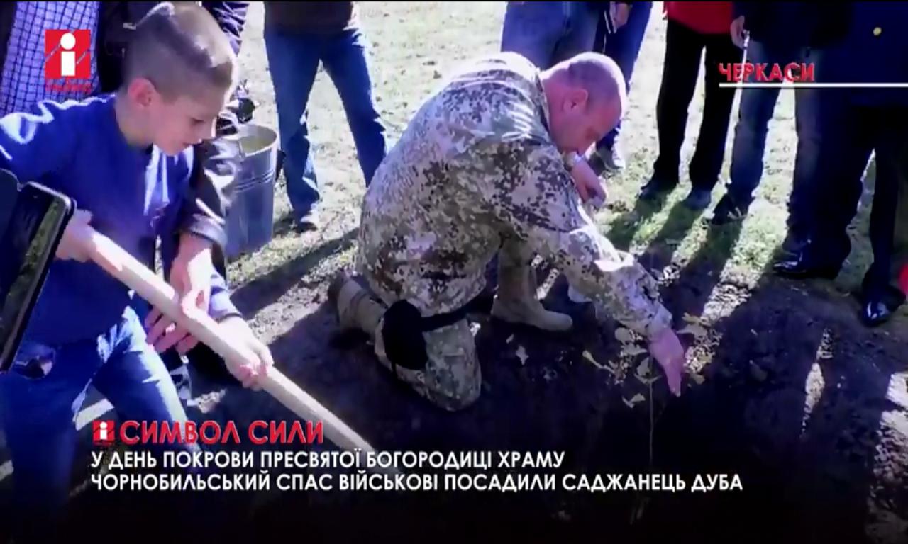 На Канівщині росте дуб, якому понад 600 років (ВІДЕО)