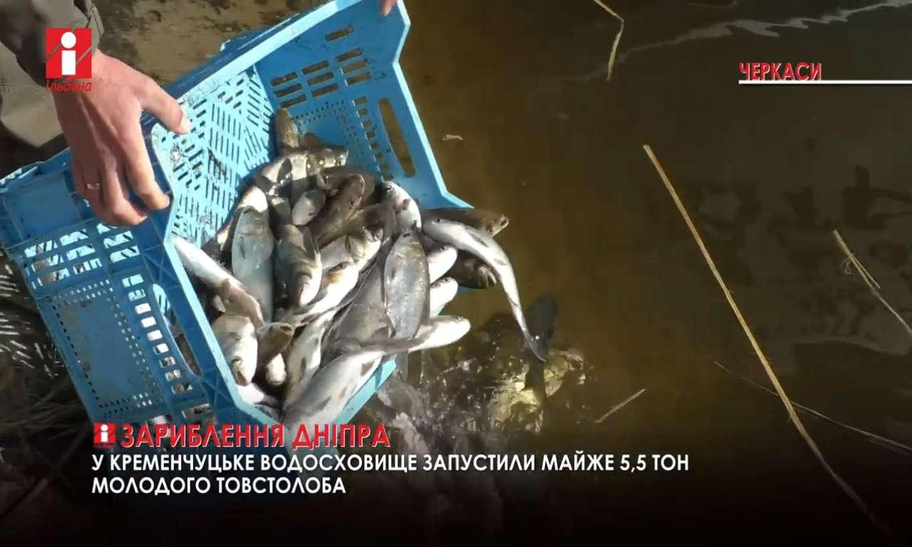 У Дніпро біля Свидівка запустили п'ять з половиною тон товстолоба (ВІДЕО)