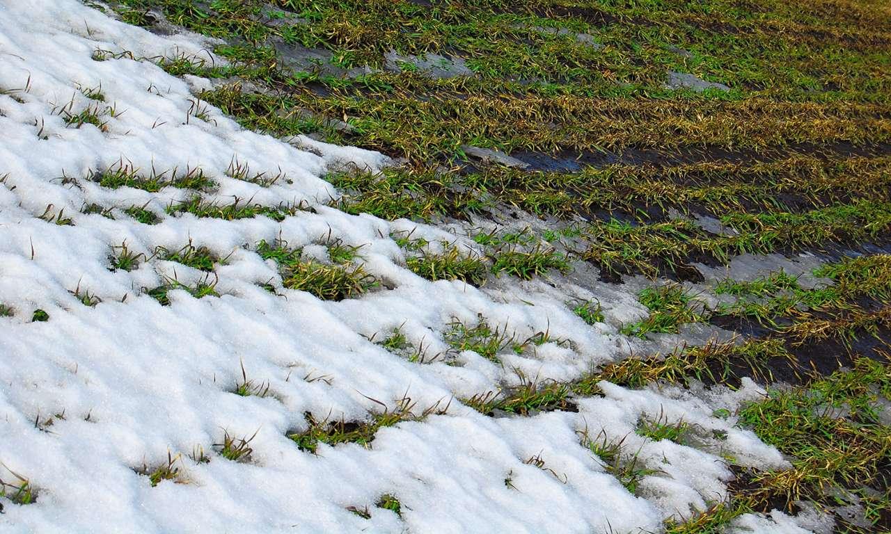 Несподівані морози загрожують озимині на Черкащині
