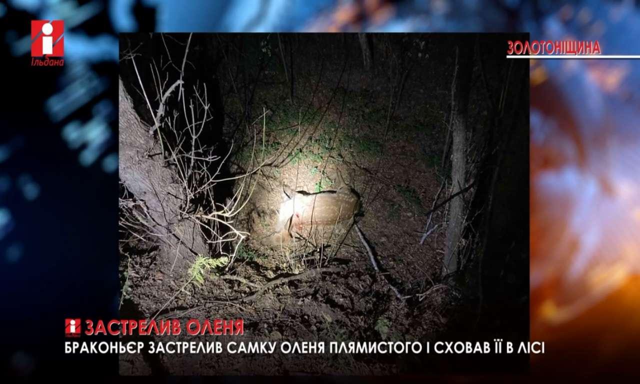 У золотоніському лісі застрелено самку оленя: за таке можуть позбавити права полювання (ВІДЕО)
