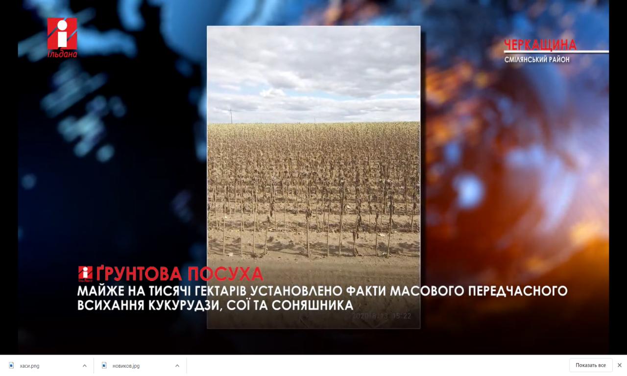 Майже тисячу гектарів посівів постраждали від посухи на Смілянщині (ВІДЕО)