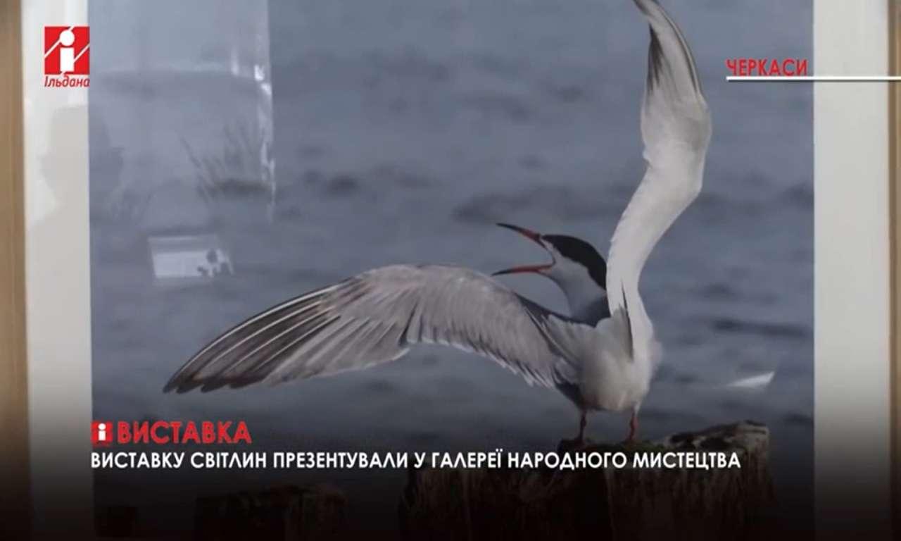 Виставка Анни Алабіної: птахи на світлинах - відкрилася у Черкасах (ВІДЕО)