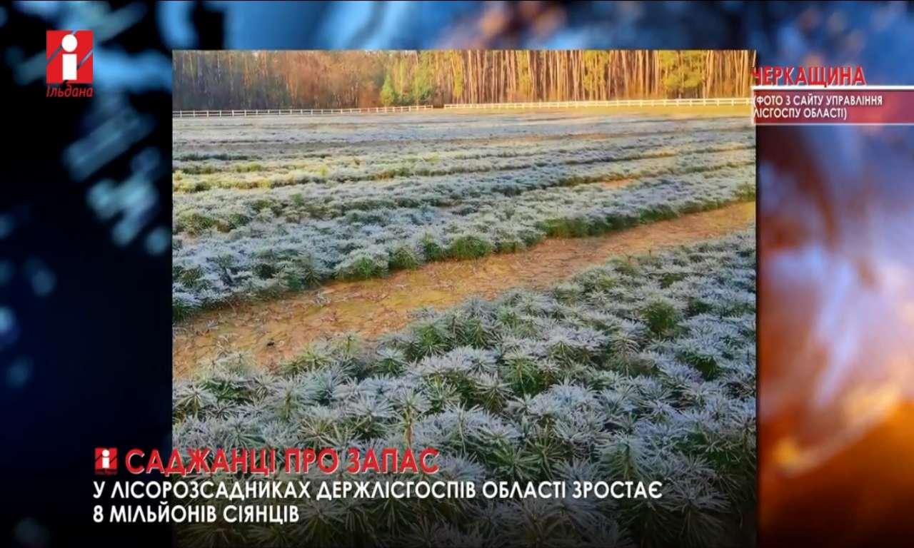 Понад 7 млн саджанців виростять черкаські лісівники до весни (ВІДЕО)