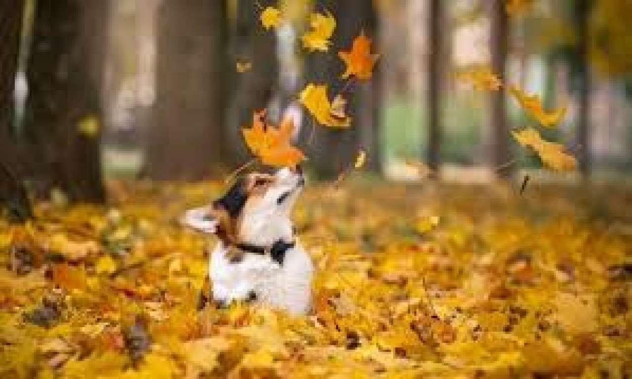 У Кам'янціз жомової ями врятували безпритульного собаку (ВІДЕО)