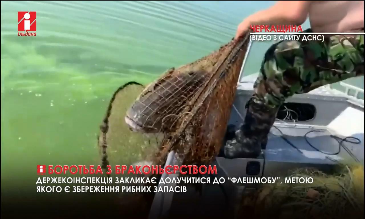 250 кілограмів риби наловили браконьєри (ВІДЕО)