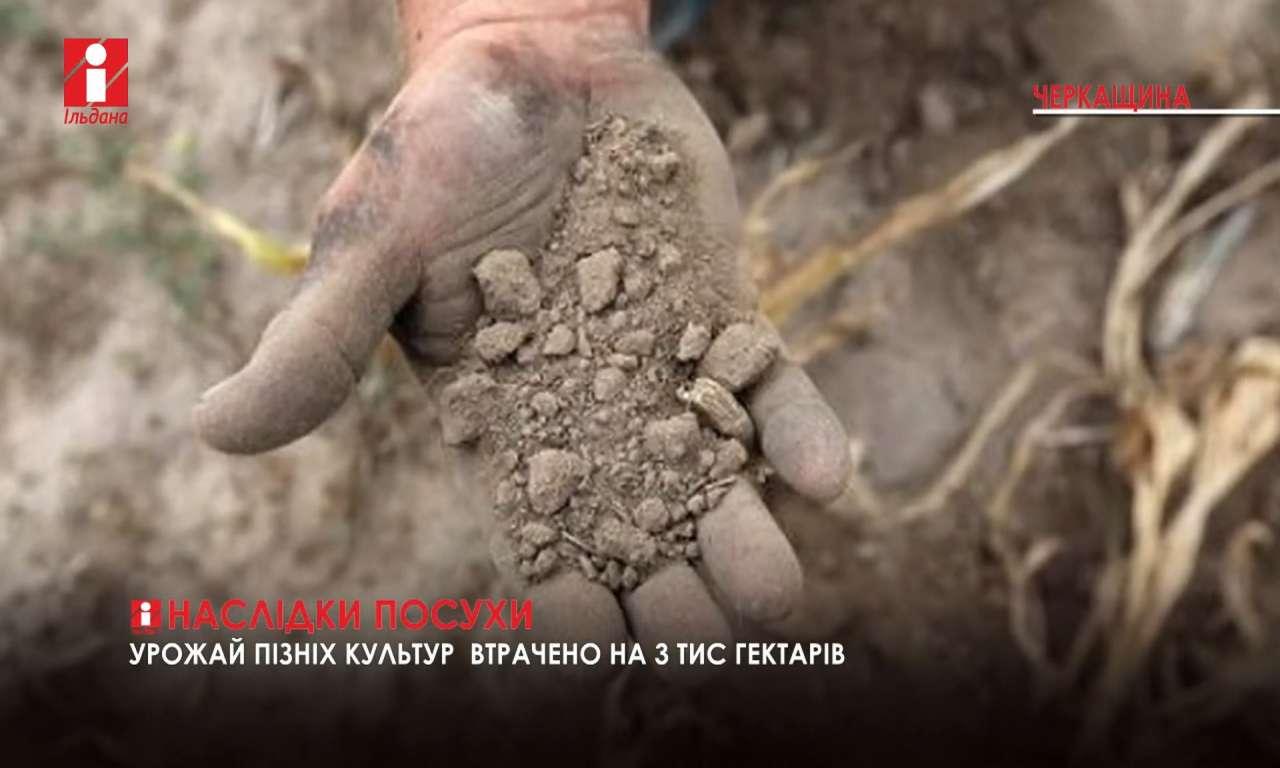 На Черкащині втрачено урожай пізніх культур на трьох тисячах гектарів (ВІДЕО)