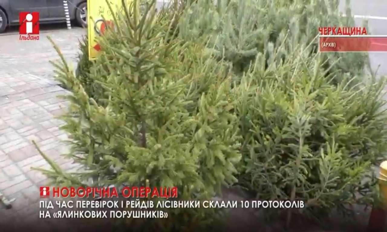 Новорічні ялинки за торішніми цінами пропонують у Канівському та Смілянському лісгоспах (ВІДЕО)