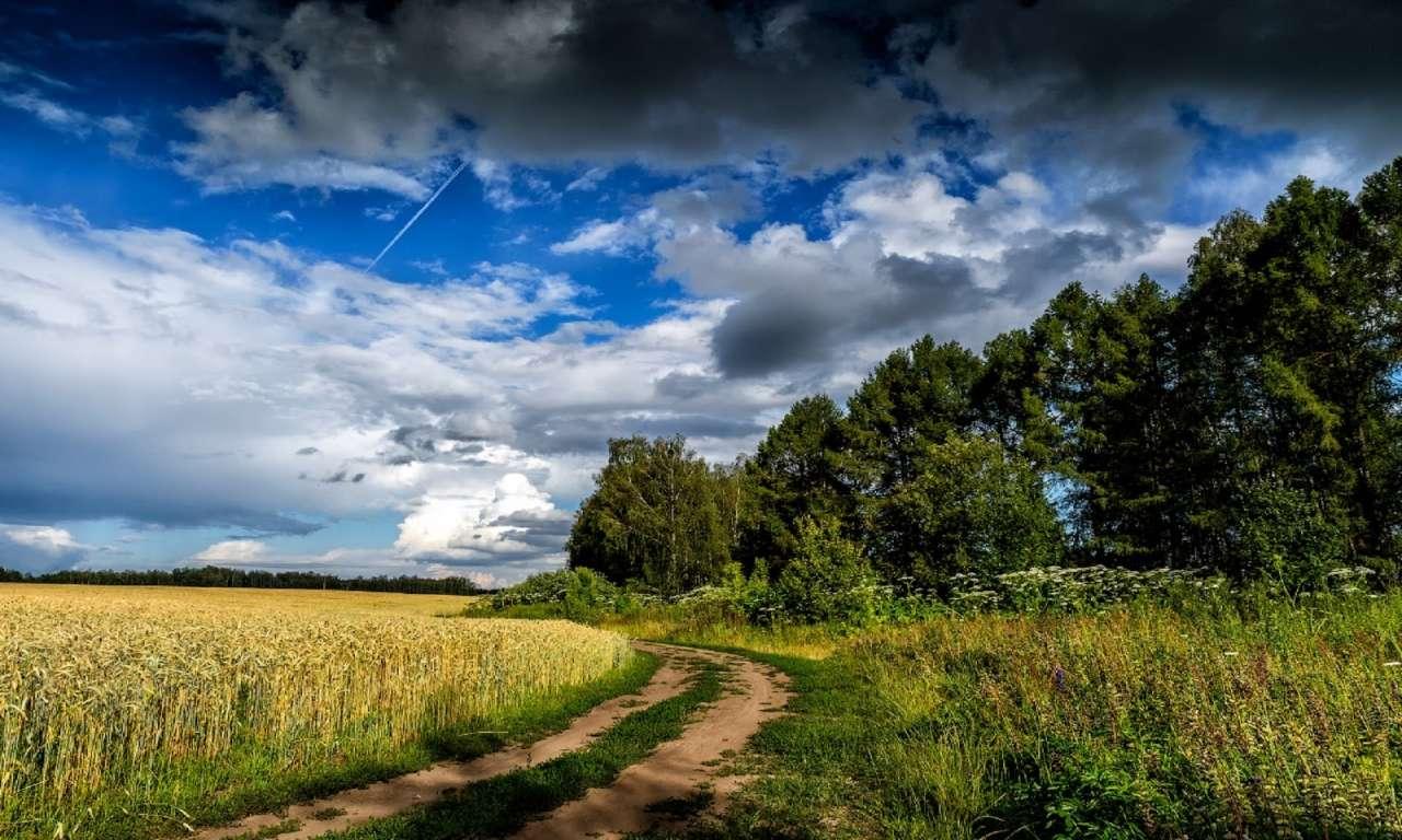 З четверга на Черкащину нарешті завітає літо: дощі припиняться, повітря прогріється