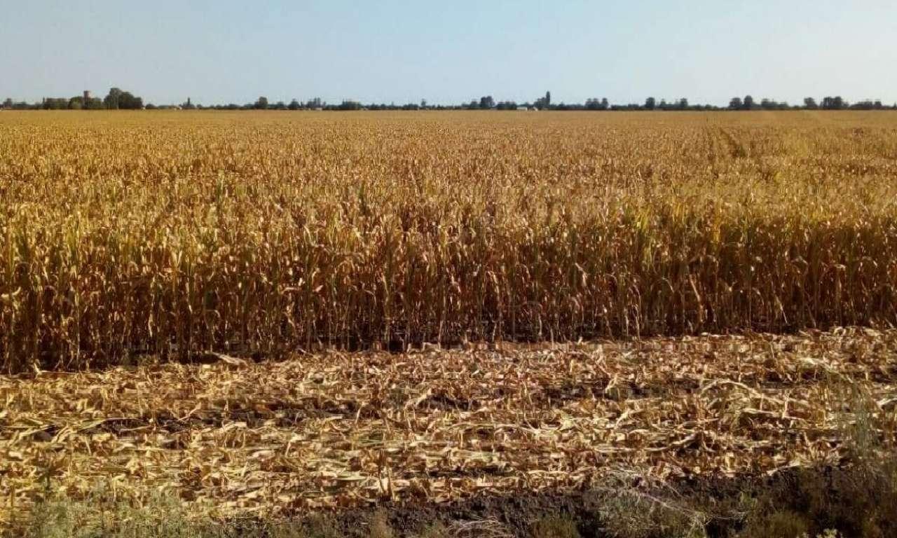 На Черкащині панує жорстка засуха: врожай під загрозою