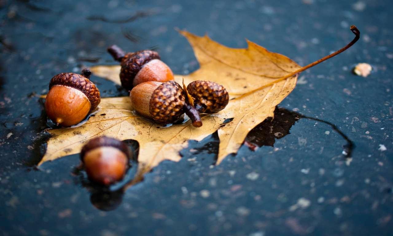 «Гойдалки» з листопада у вересень: погода на Черкащині цього тижня буде мінливою
