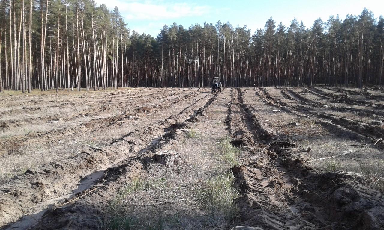 Для посадки лісу навесні золотоніські лісівники підготували 25 гектарів площ