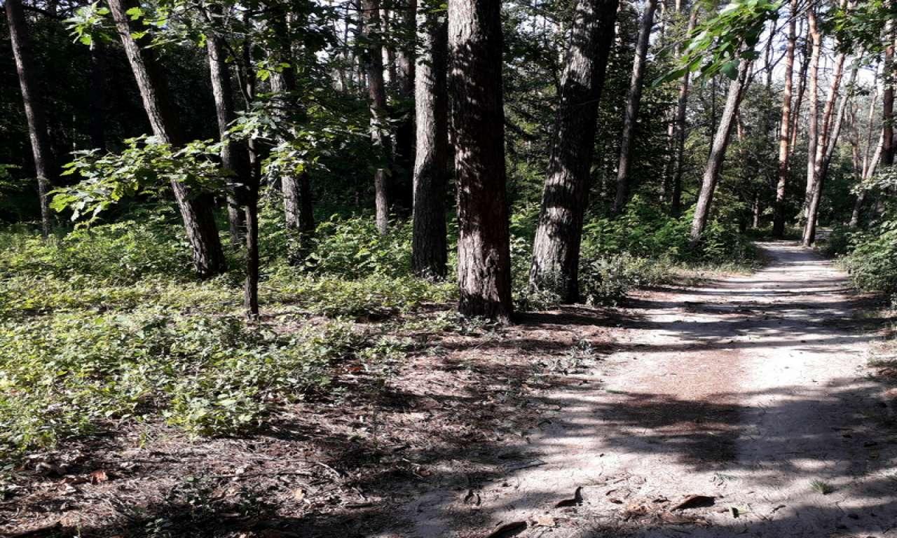 Спекотними доріжками черкаських парків (ФОТОРЕПОРТАЖ)