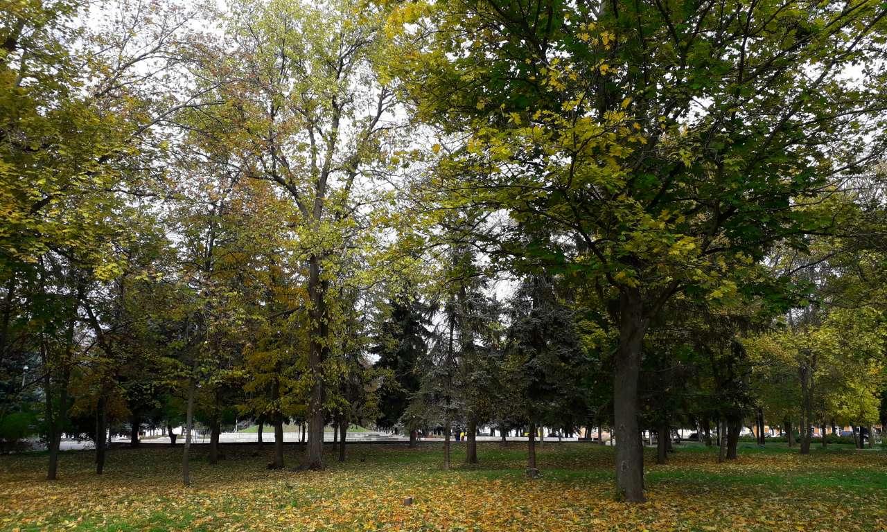 Осінні фарби золотоніського парку (ФОТОРЕПОРТАЖ)-1017