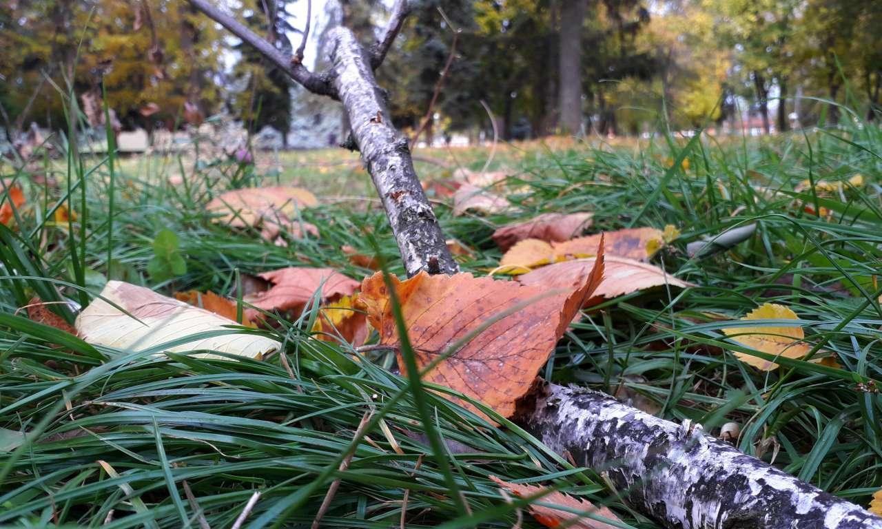 Осінні фарби золотоніського парку (ФОТОРЕПОРТАЖ)-1018