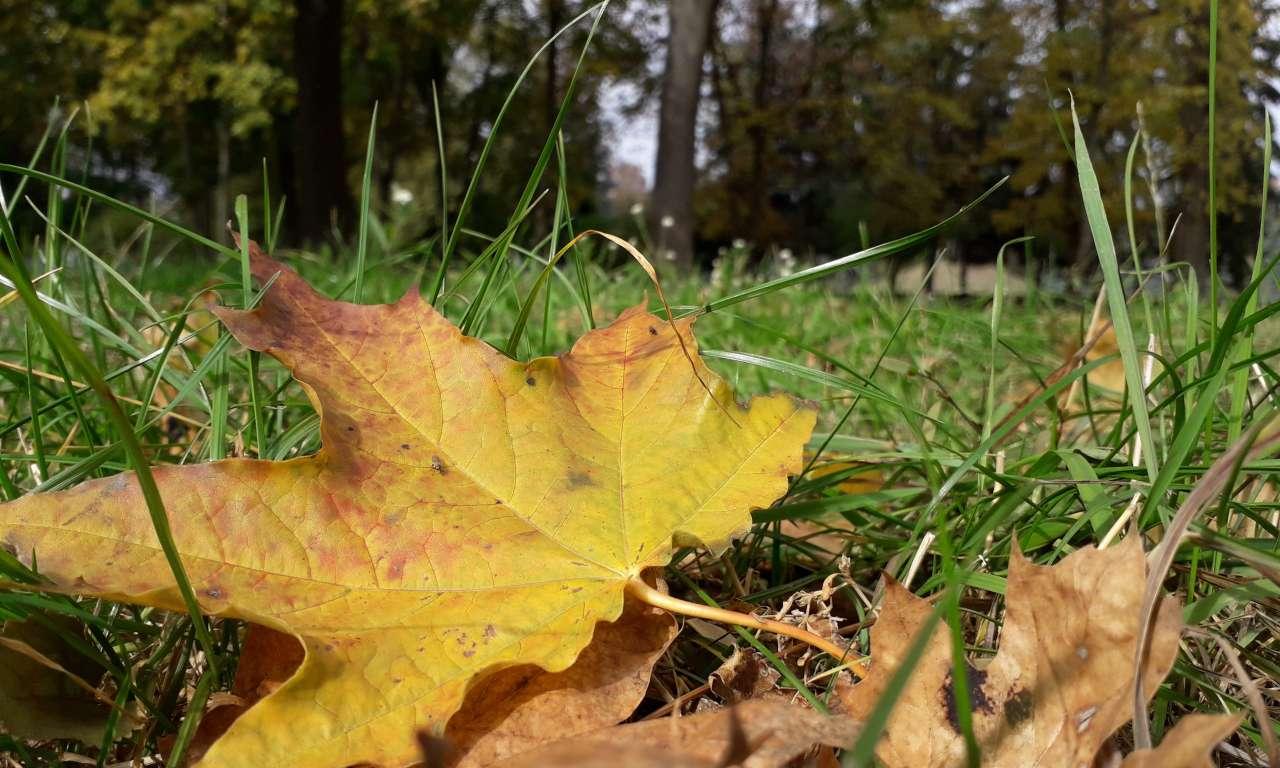 Осінні фарби золотоніського парку (ФОТОРЕПОРТАЖ)-1019