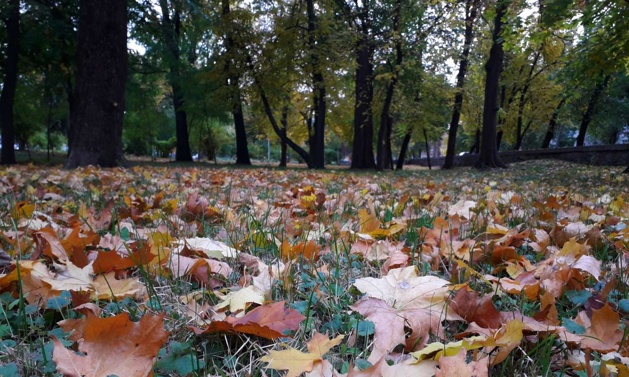 Осінні фарби золотоніського парку (ФОТОРЕПОРТАЖ)-1021