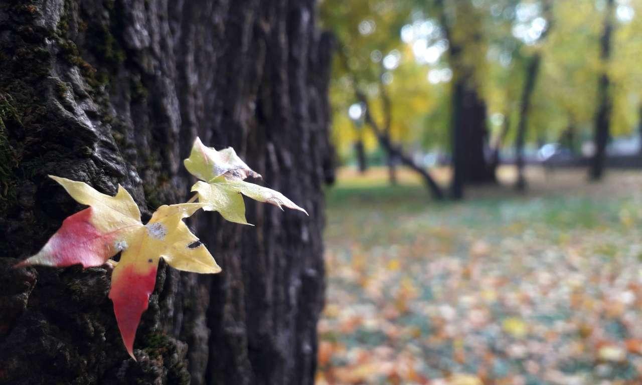 Осінні фарби золотоніського парку (ФОТОРЕПОРТАЖ)-1022