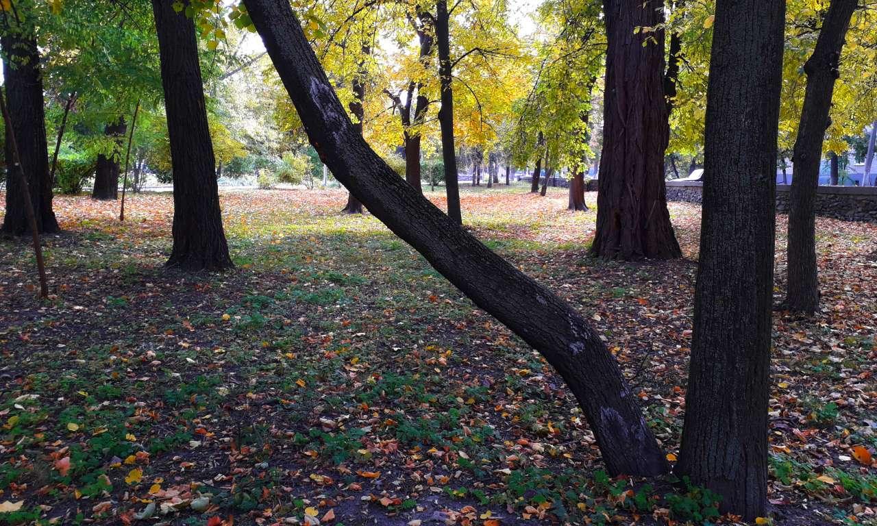 Осінні фарби золотоніського парку (ФОТОРЕПОРТАЖ)-1023