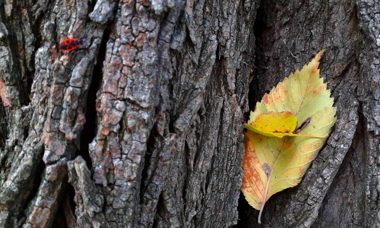 Осінні фарби золотоніського парку (ФОТОРЕПОРТАЖ)-1025