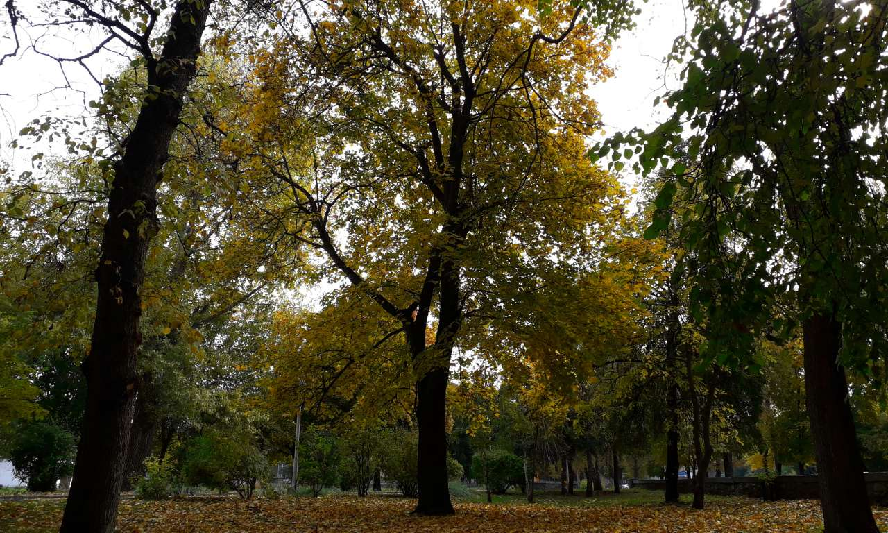 Осінні фарби золотоніського парку (ФОТОРЕПОРТАЖ)-1026