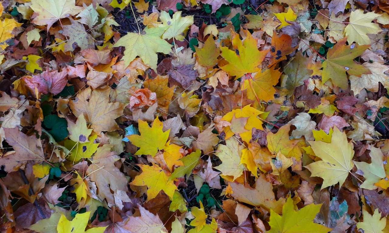 Осінні фарби золотоніського парку (ФОТОРЕПОРТАЖ)-1027