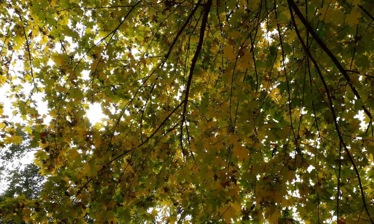 Осінні фарби золотоніського парку (ФОТОРЕПОРТАЖ)-1028