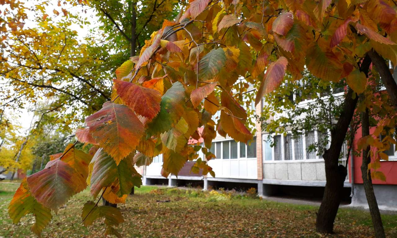 Осінні фарби золотоніського парку (ФОТОРЕПОРТАЖ)-1033