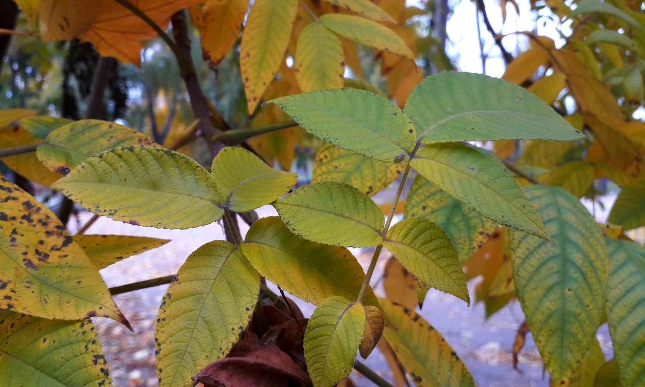 Осінні фарби золотоніського парку (ФОТОРЕПОРТАЖ)-1038