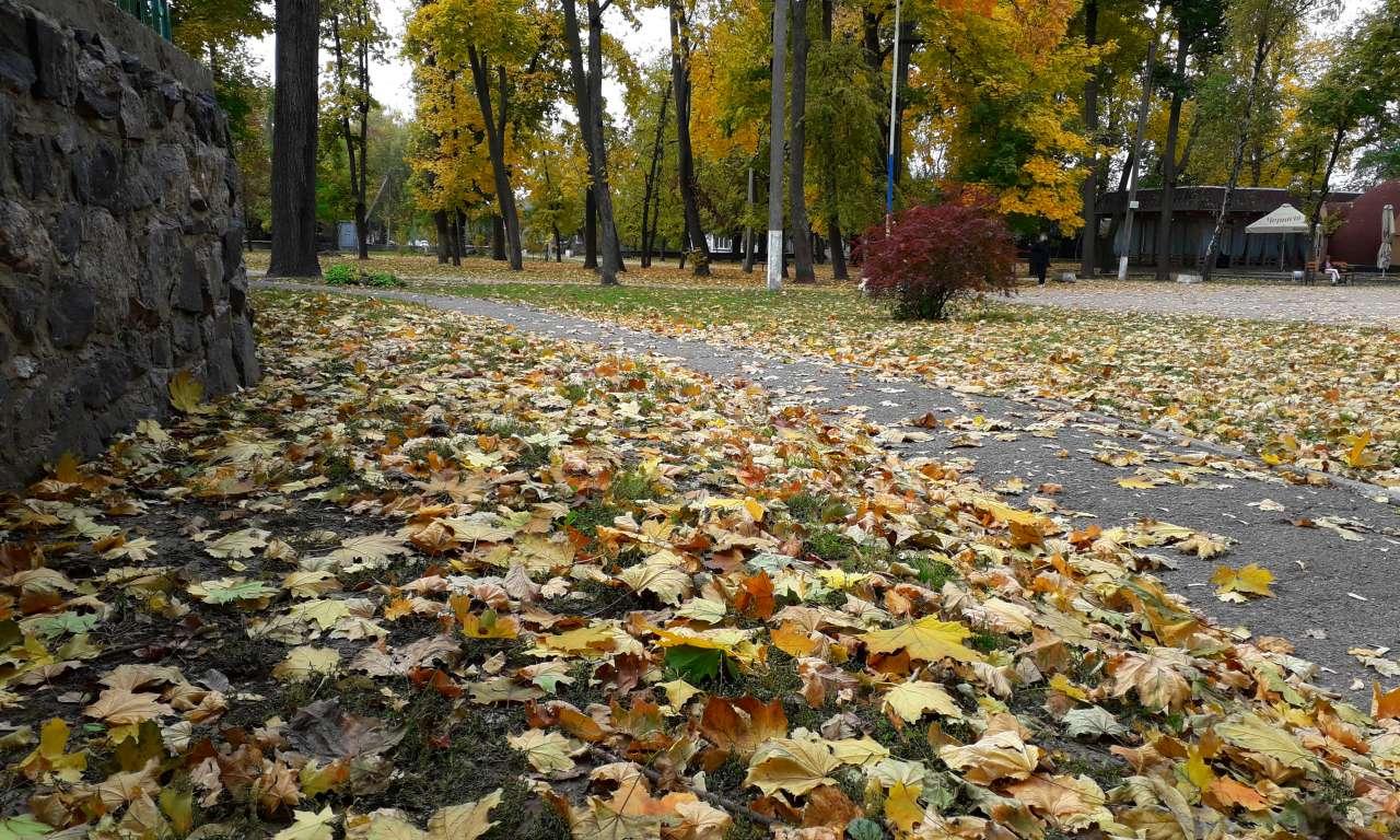 Осінні фарби золотоніського парку (ФОТОРЕПОРТАЖ)-1040