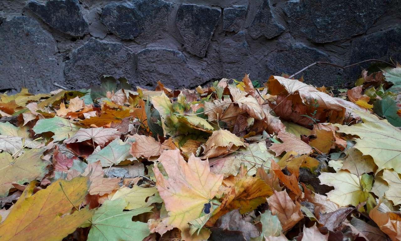 Осінні фарби золотоніського парку (ФОТОРЕПОРТАЖ)-1041