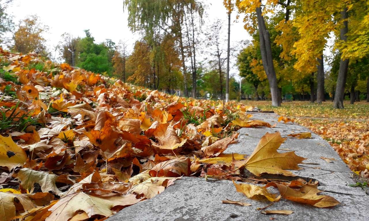 Осінні фарби золотоніського парку (ФОТОРЕПОРТАЖ)-1045