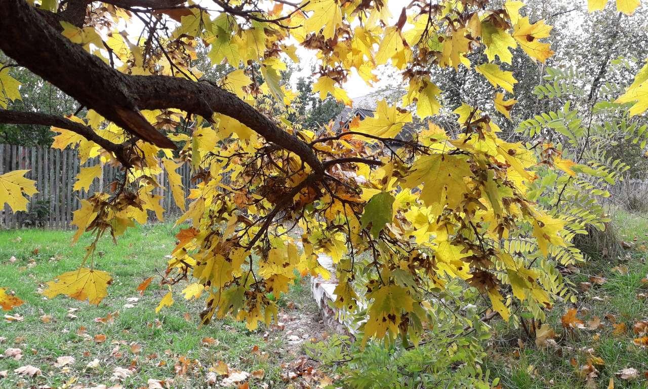 Осінні фарби золотоніського парку (ФОТОРЕПОРТАЖ)-1046