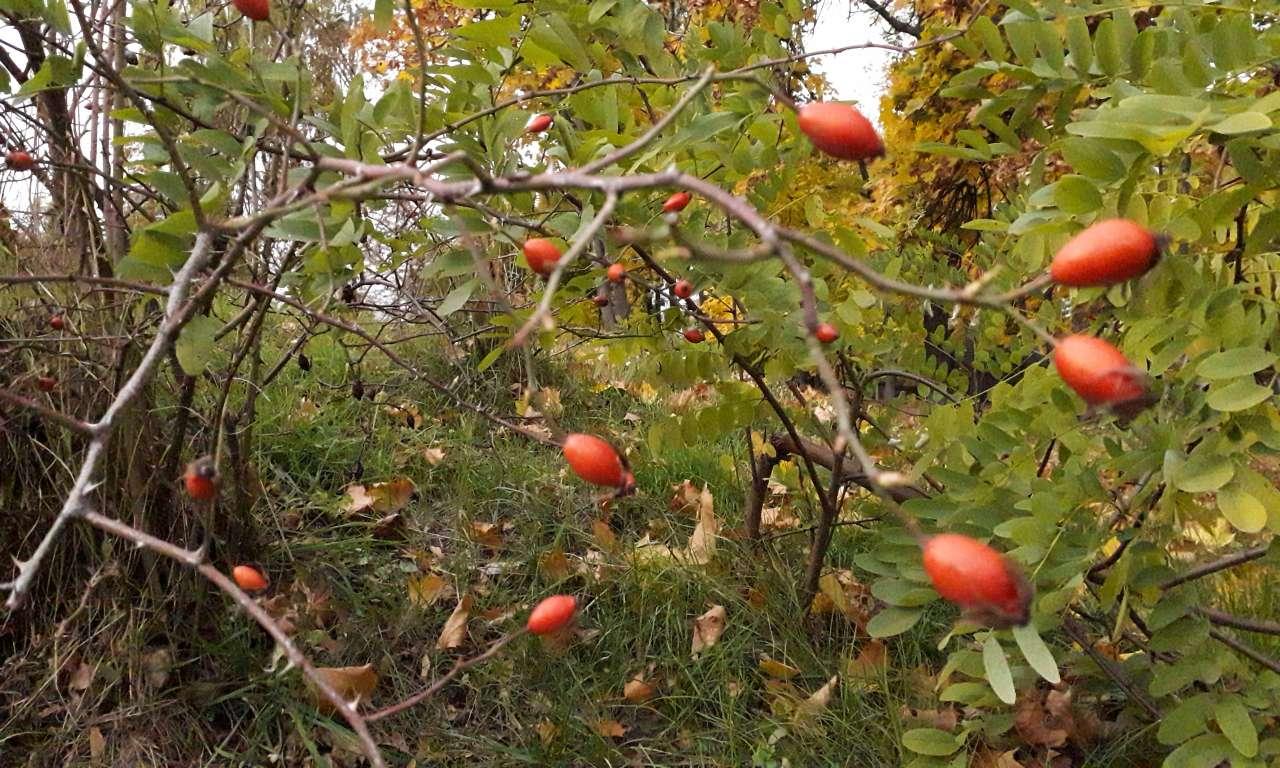 Осінні фарби золотоніського парку (ФОТОРЕПОРТАЖ)-1047