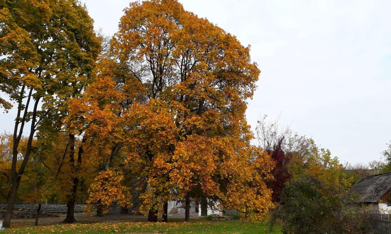 Осінні фарби золотоніського парку (ФОТОРЕПОРТАЖ)-1048