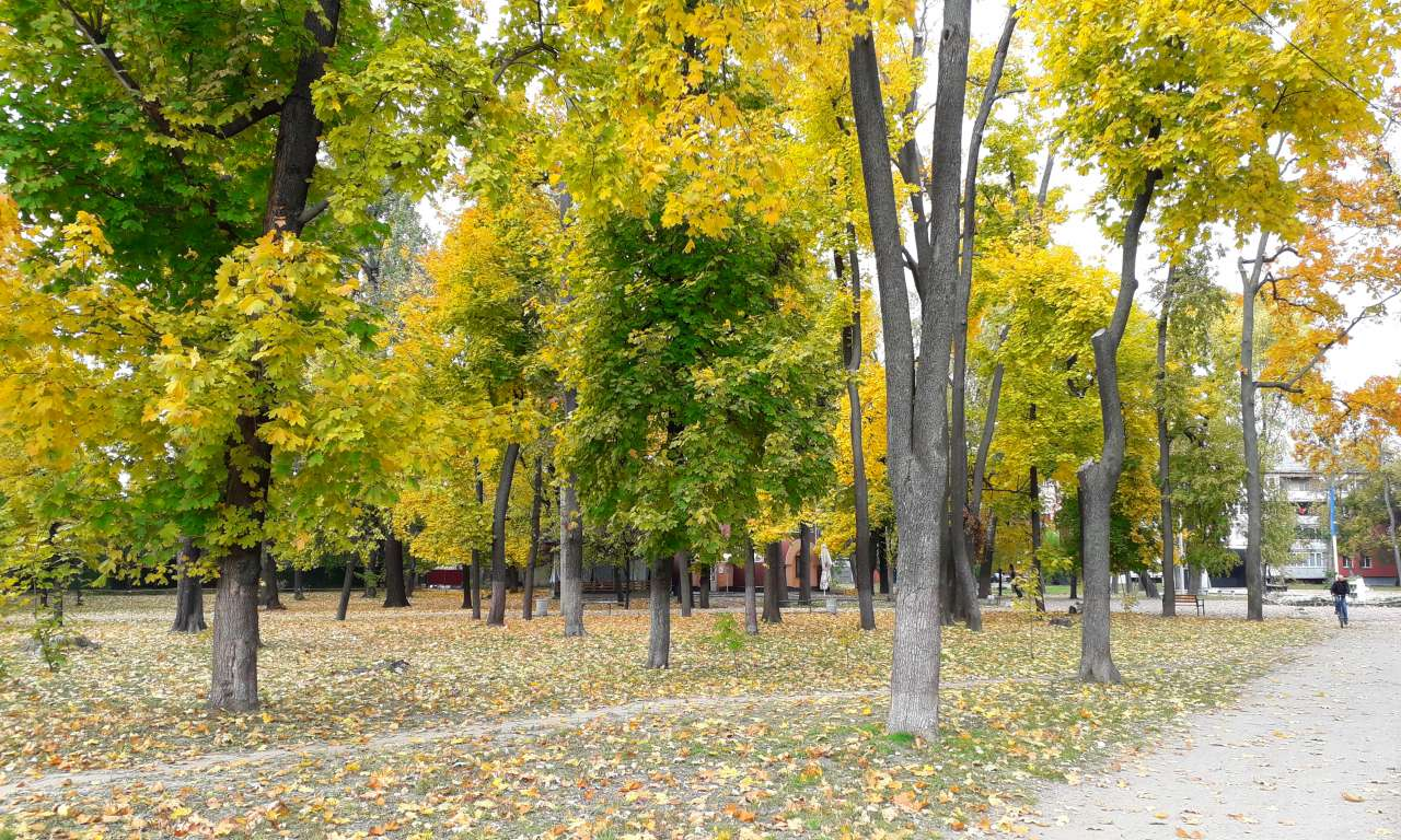 Осінні фарби золотоніського парку (ФОТОРЕПОРТАЖ)-1050