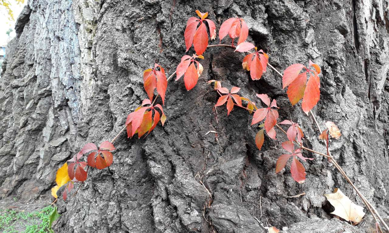 Осінні фарби золотоніського парку (ФОТОРЕПОРТАЖ)-1051
