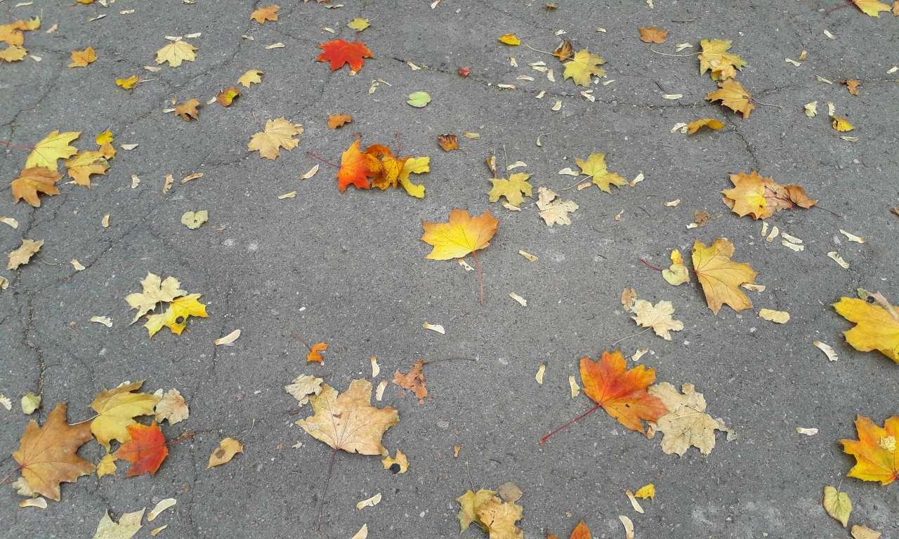 Осінні фарби золотоніського парку (ФОТОРЕПОРТАЖ)-1054
