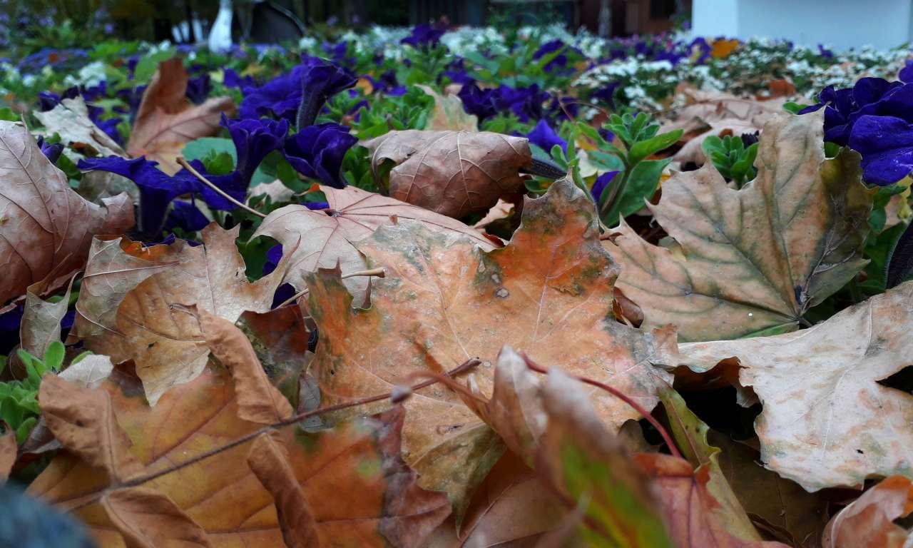 Осінні фарби золотоніського парку (ФОТОРЕПОРТАЖ)-1057