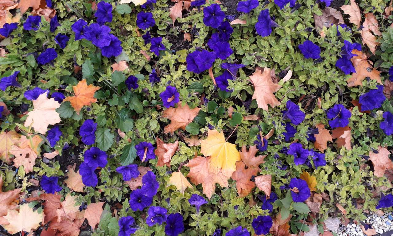 Осінні фарби золотоніського парку (ФОТОРЕПОРТАЖ)-1059