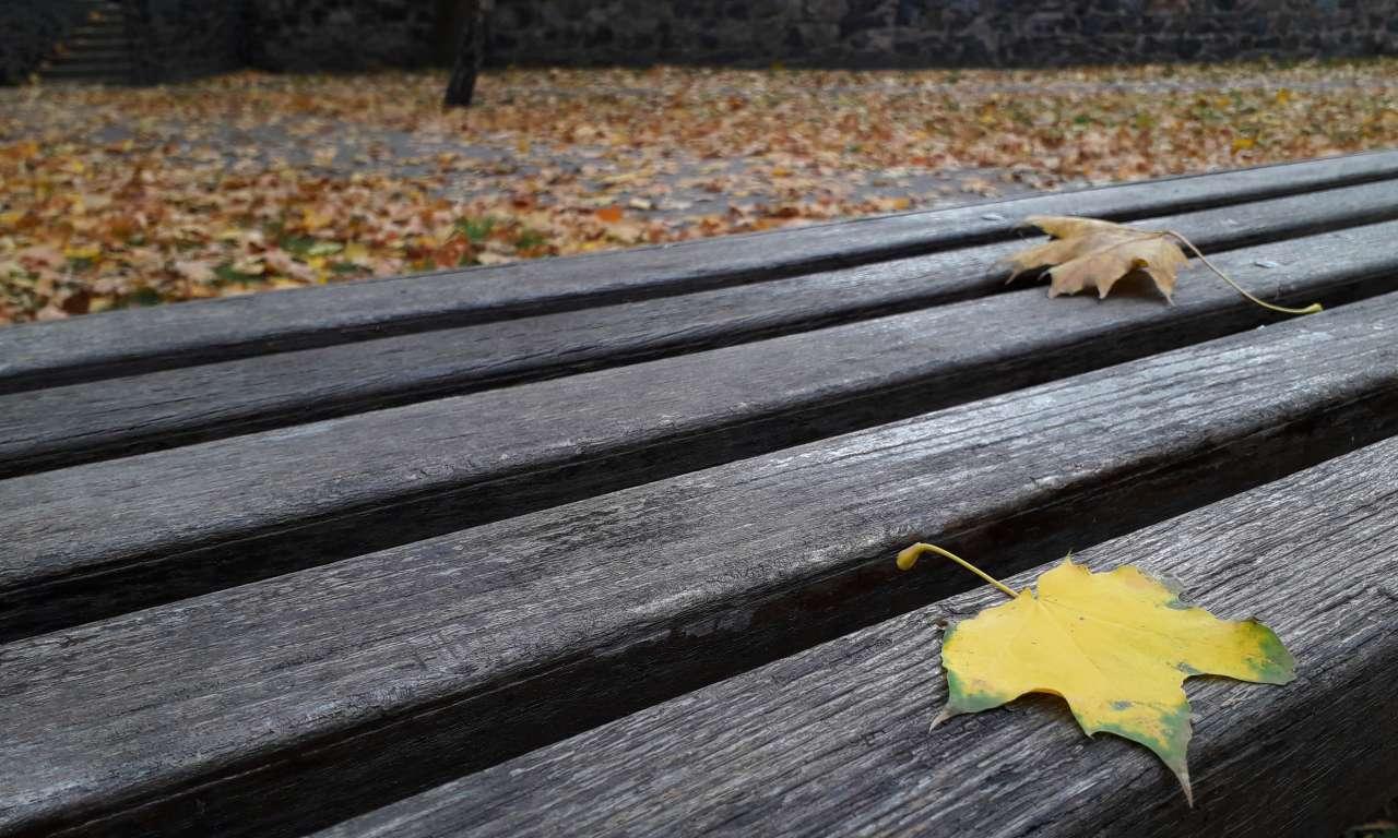 Осінні фарби золотоніського парку (ФОТОРЕПОРТАЖ)-1061