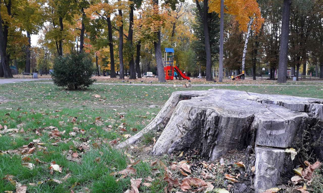 Осінні фарби золотоніського парку (ФОТОРЕПОРТАЖ)-1063