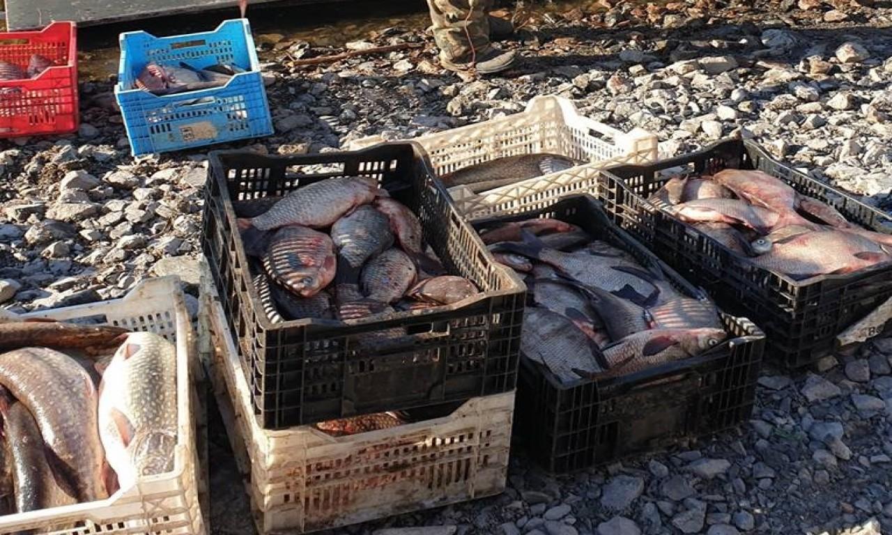 Екологи виявили понад 2 км сіток та півтонни риби