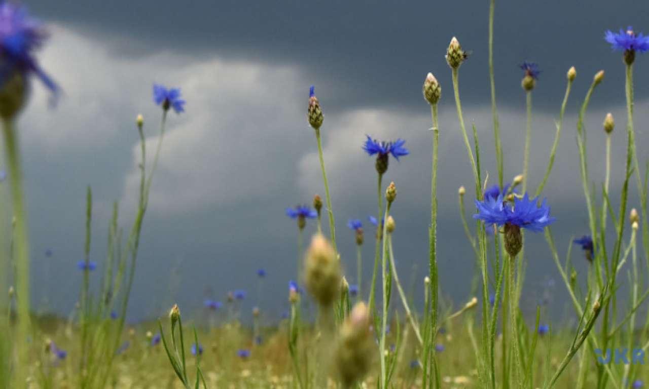 Холодний атмосферний фронт принесе на Черкащину дощі з грозами