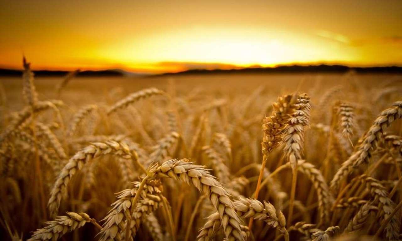 Погода не зіпсує врожай на Черкащині, заспокоюють синоптики