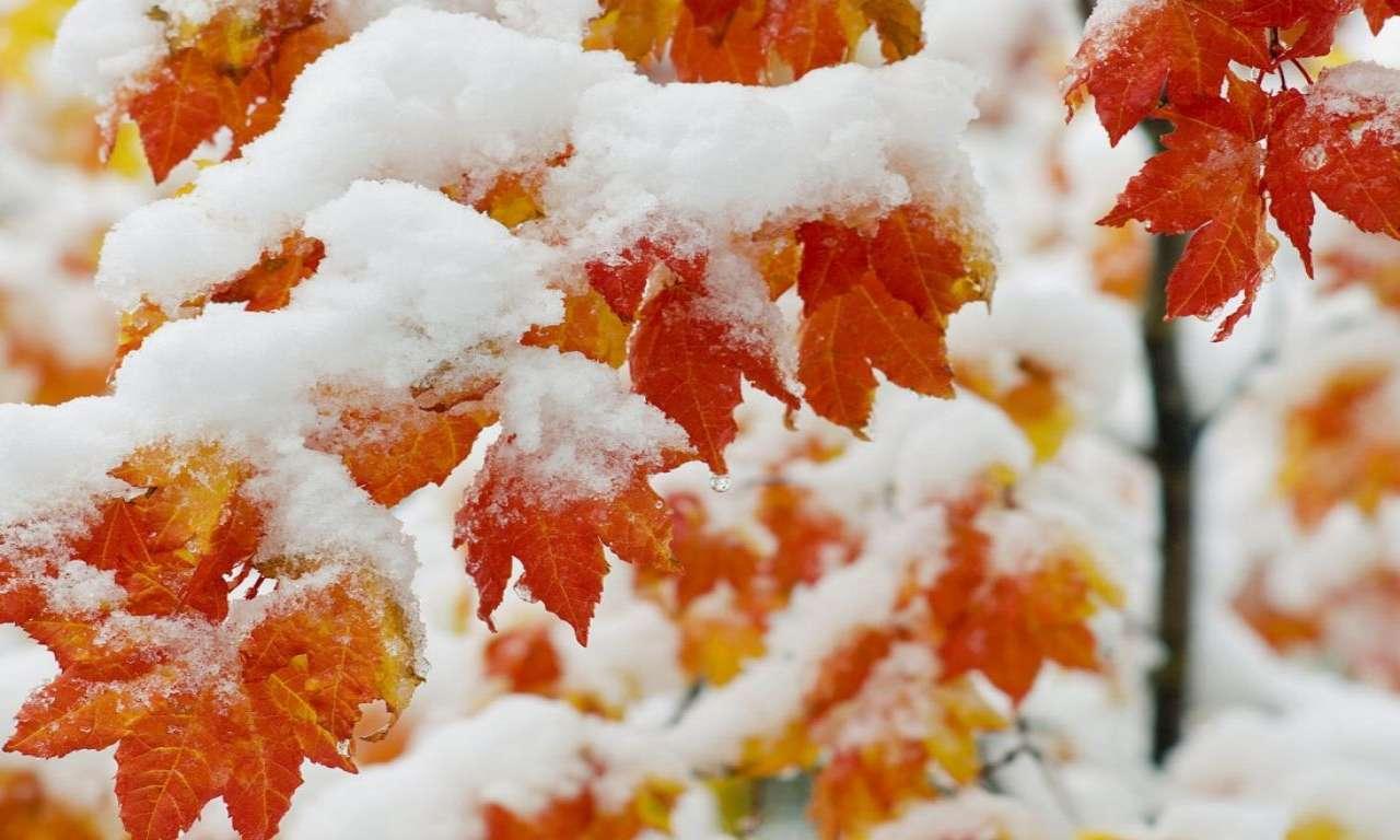 Зима прийде на Черкащину майже за календарем: очікуємо перший сніг