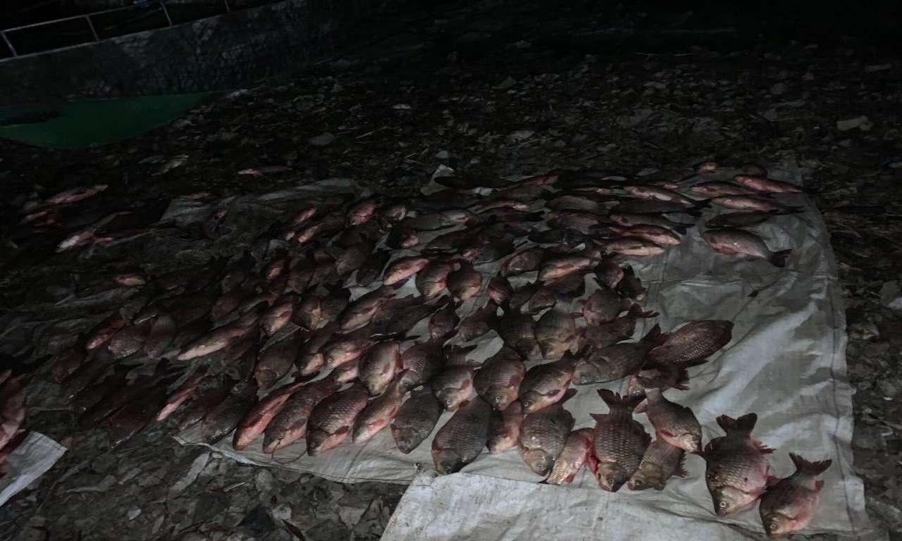 Двоє браконьєрів десятьма сітками виловили понад 300 кг риби у заказнику