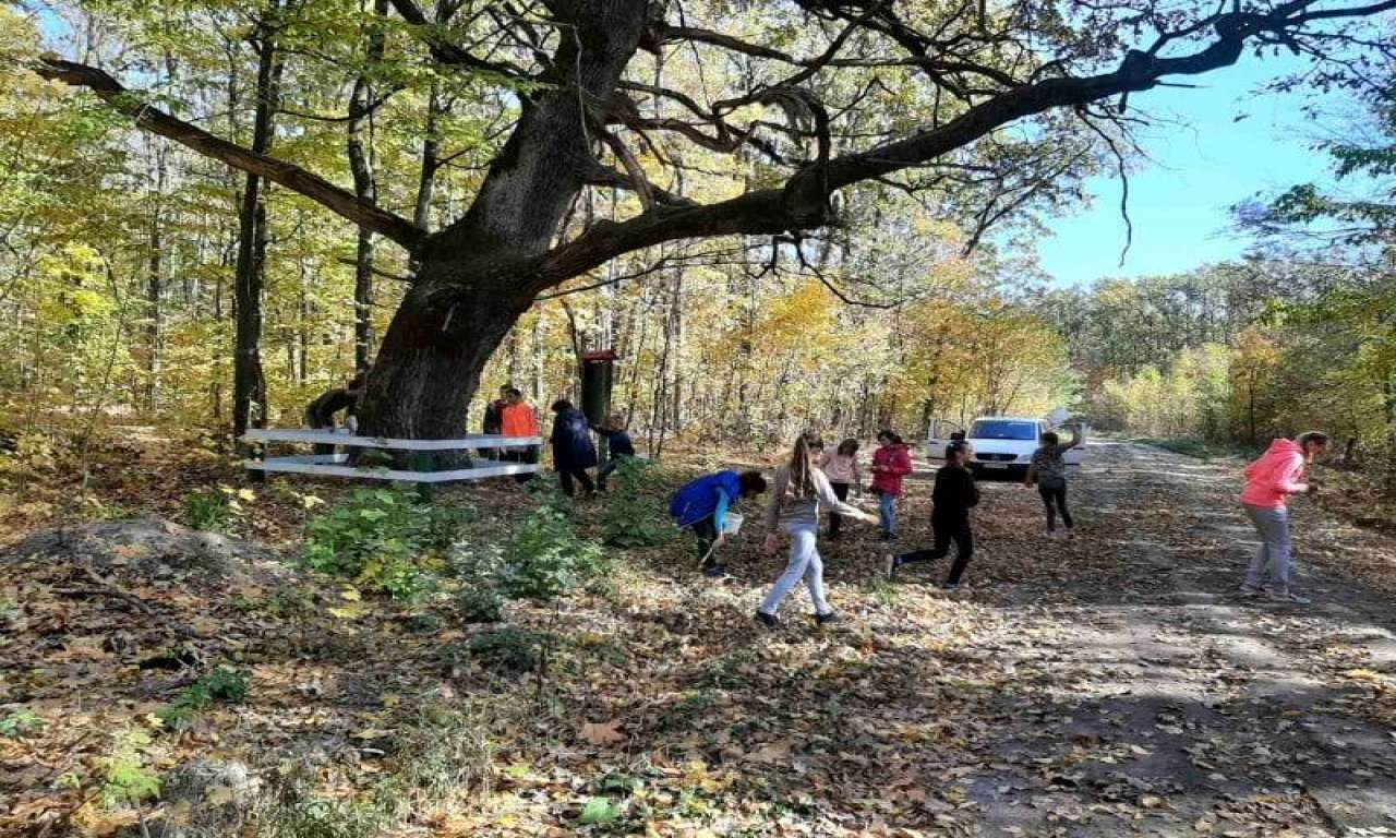 Понад 200 кг жолудів зібрали учні шкільного лісництва та лисянські лісівники